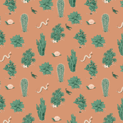 succulents_terracotta