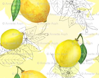 Fresh lemons  on white