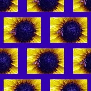 KRLGHoneyBeeOnSunflower-sm blue