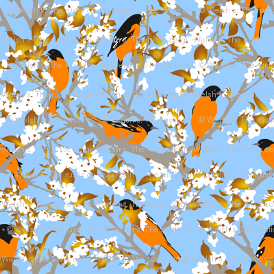 Orioles in the orchard plucking pear blossoms - large