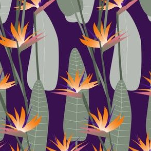 bird-of-paradise-purple