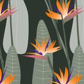 bird-of-paradise-darkgreen