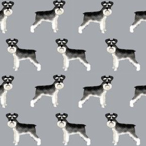 Schnauzer black and white dog plain grey