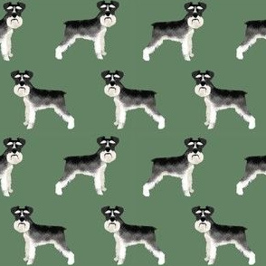Schnauzer black and white dog plain med green