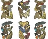 Rrfatquarterbutterfliesspoonflower_thumb