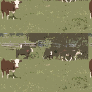 pitnacree cows