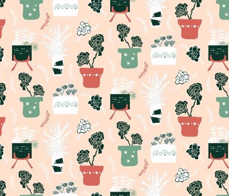 Rsucculent_different_shop_preview