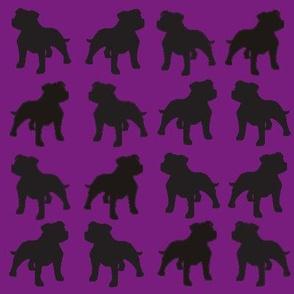 Staffies on Purple