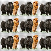 R1721502_rred_and_black_chows_shop_thumb