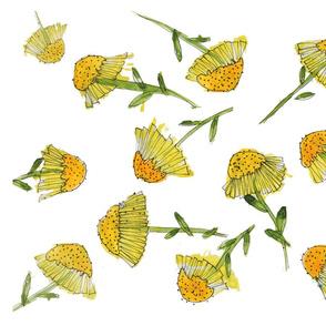 Echinacea Flowers 3