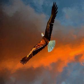 bald_eagle_1_TT