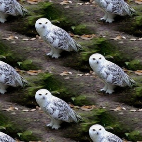 snowy owl, oil painting effect