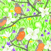 Robins and Spring Blooms