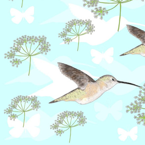 Hummingbirds & Queen Anne Lace