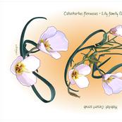 tea towel flowers mariposa sego lily flora