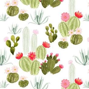 Bloomin' Desert