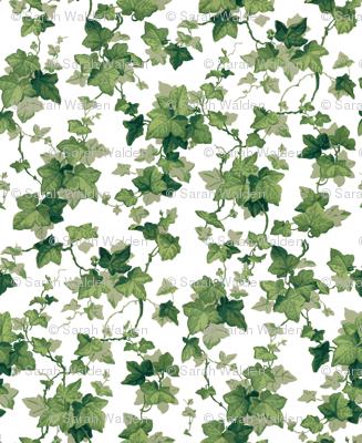 English Ivy ~ Bright