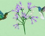 Rrrrhummingbirds_thumb
