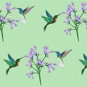 Blooming Hummingbirds
