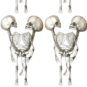 skulls skeletons death anatomy vintage black white monochrome eerie macabre spooky bizarre morbid anatomical studies  conjoined twins Siamese siblings