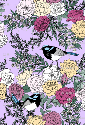 Superb Fairy Wrens and Roses