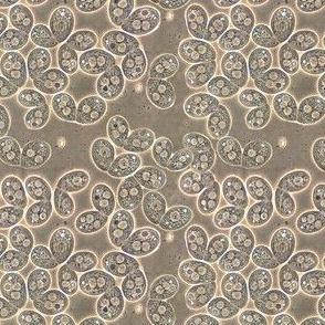Tetrahymena Paisley