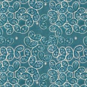 Tetrahymena Paisley Blueprint