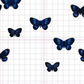 Blue Butterfly  Pink/gray grids