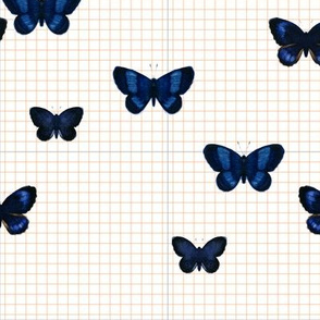 Blue butterfly  Orange/gray Grid