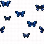 Blue butterfly_pink/mint grid