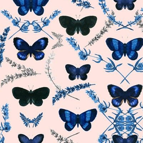 Romantic Butterfly _ Blue/pink