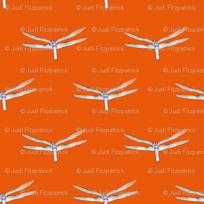 Dragonfly On Deep Orange