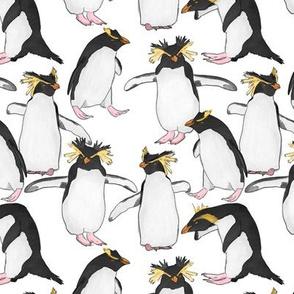 Rockhopper Penguins on White