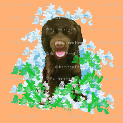 Rpeachychocolate_cocker_spaniel_preview