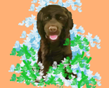 Rpeachychocolate_cocker_spaniel_thumb