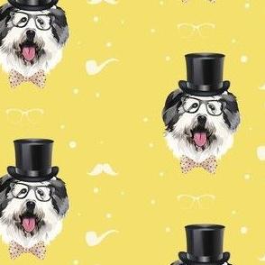English Shepard dog in yellow