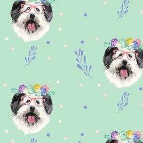 English Shepard girl dog in mint