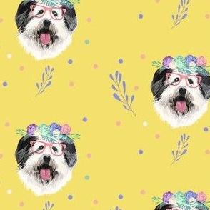 English Shepard girl dog in yellow