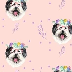 English Shepard girl dog in pink