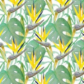 Tropical Birds of Paradise Flower