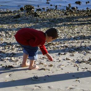 boy_on_beach_looking_at_shells