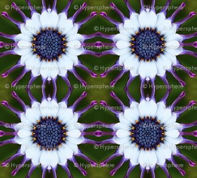 florascope 26