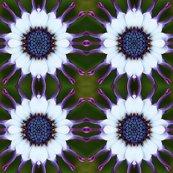 Rrrflower26x4_shop_thumb