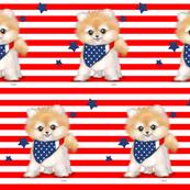 Patriotic Pomeranian Stripes M