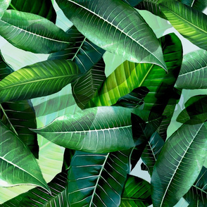 Tropical Banana Palm leaf tropical 2