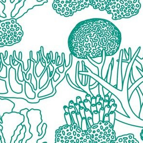 Coral (teal on white)