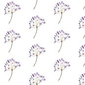 Purple Garden Flower