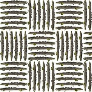 Lobefin  Ornate Bichir 12 pattern