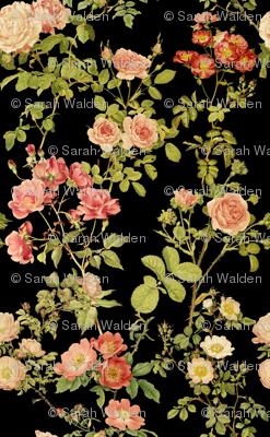 English Rose ~ Black