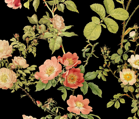 English Rose ~ Black  fabric by peacoquettedesigns on Spoonflower - custom fabric